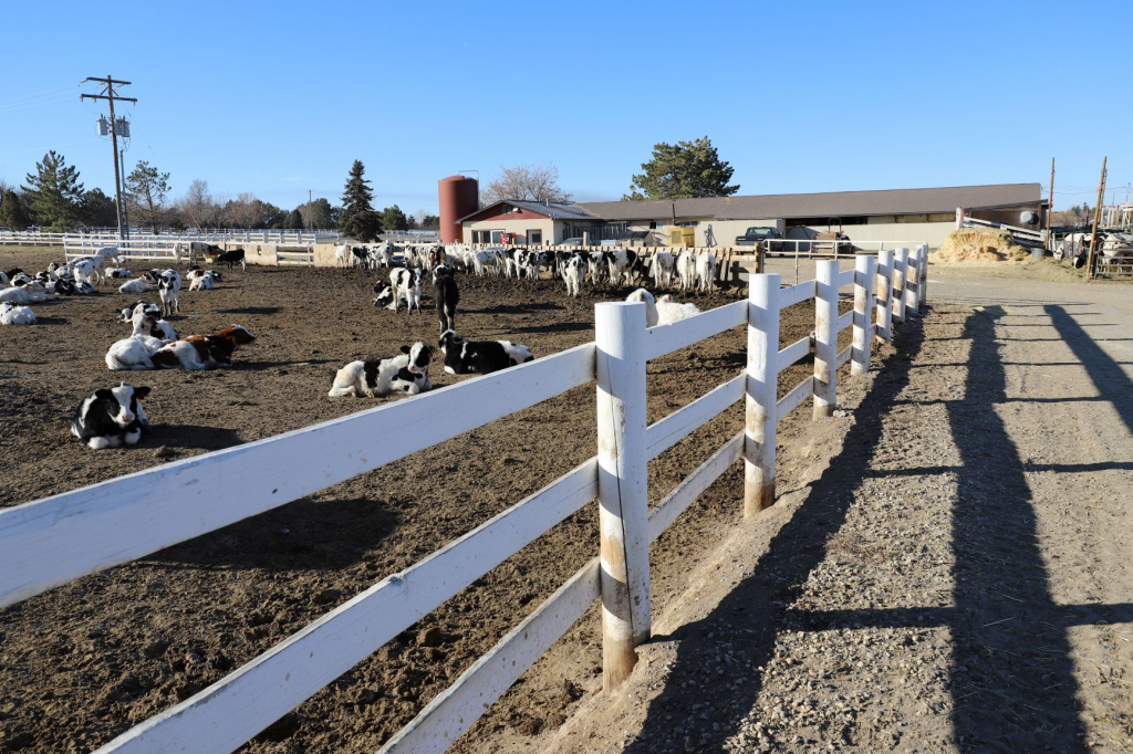 dairy for sale in idaho