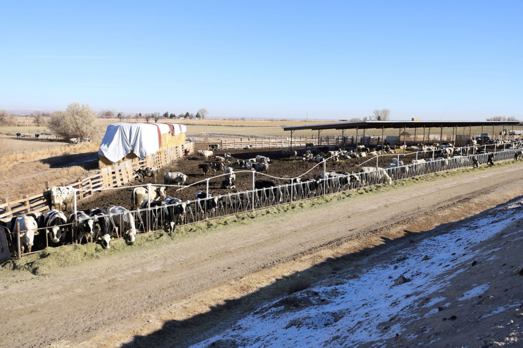 Dairies for sale in Idaho